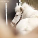 Rouwstoet Marcia_014